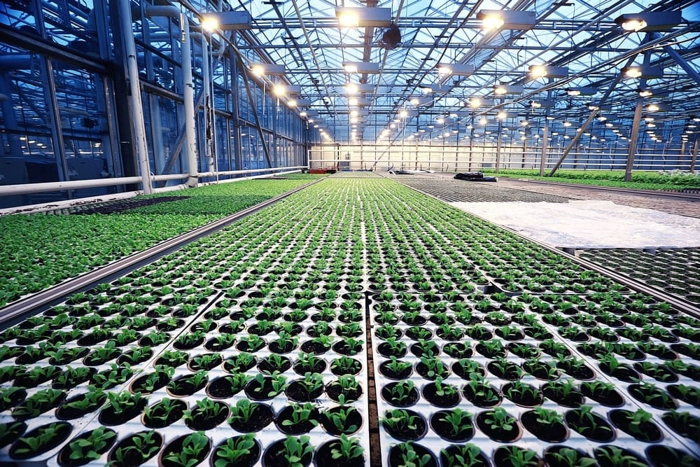 Agribusiness & Food Distribution Technology Guide
