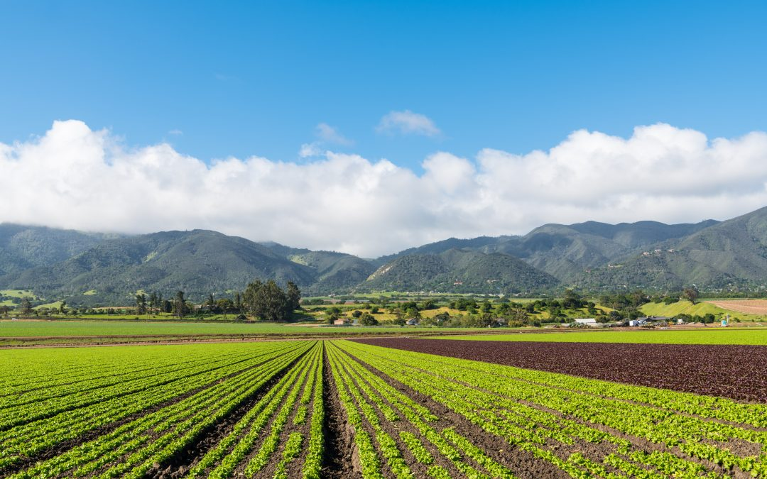 Big Data and the Agricultural Industry: The Future of Farming