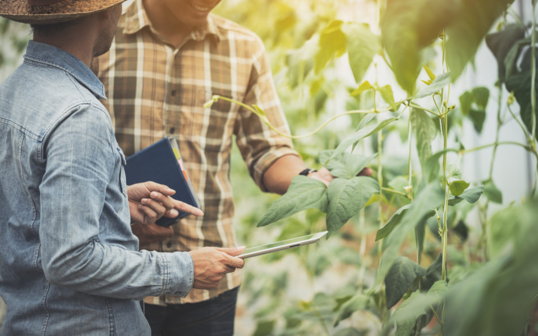 Ag Co-ops: 5 Steps to Take to Boost Cybersecurity Protection